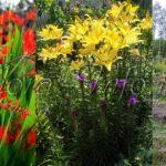 6 луковичных и клубневых цветов для весенней посадки