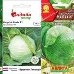 Белокочанная капуста – какой ранний сорт выбрать