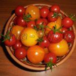 Как вырастить вкусный томат на своей грядке