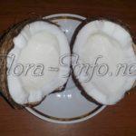 Кокос - что за орех, польза кокоса
