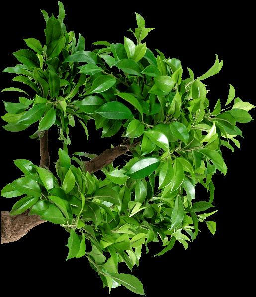 Flora-Info.com