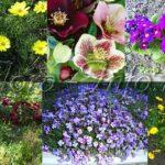 Многолетники для весеннего цветения