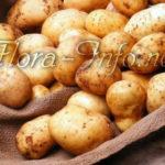 Молодой картофель в мае – легко