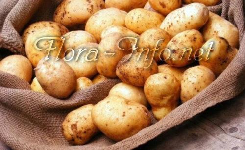 Молодой картофель в мае