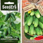 Пучковые огурцы – лучшие сорта и особенности урожайности